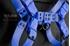 Picture of Blue bulldog harness